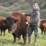 Charlie with 'Polar Bear' the stud's own Red Devon Bull