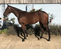 Lot 36 B.f SEA THE STARS x PLANETE BLEUE